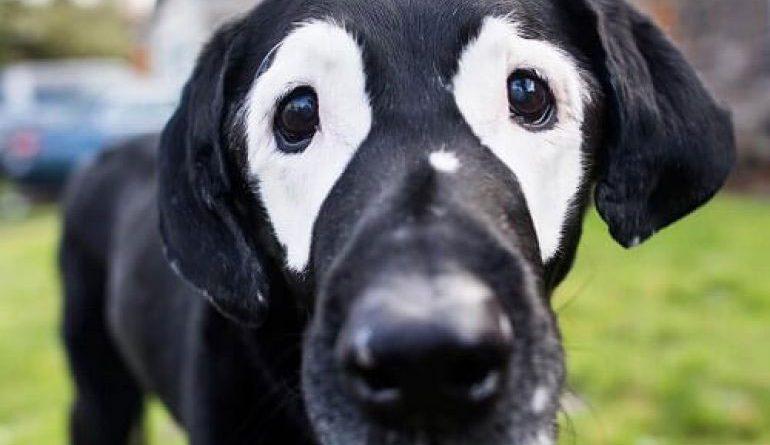perros sociales comportamiento