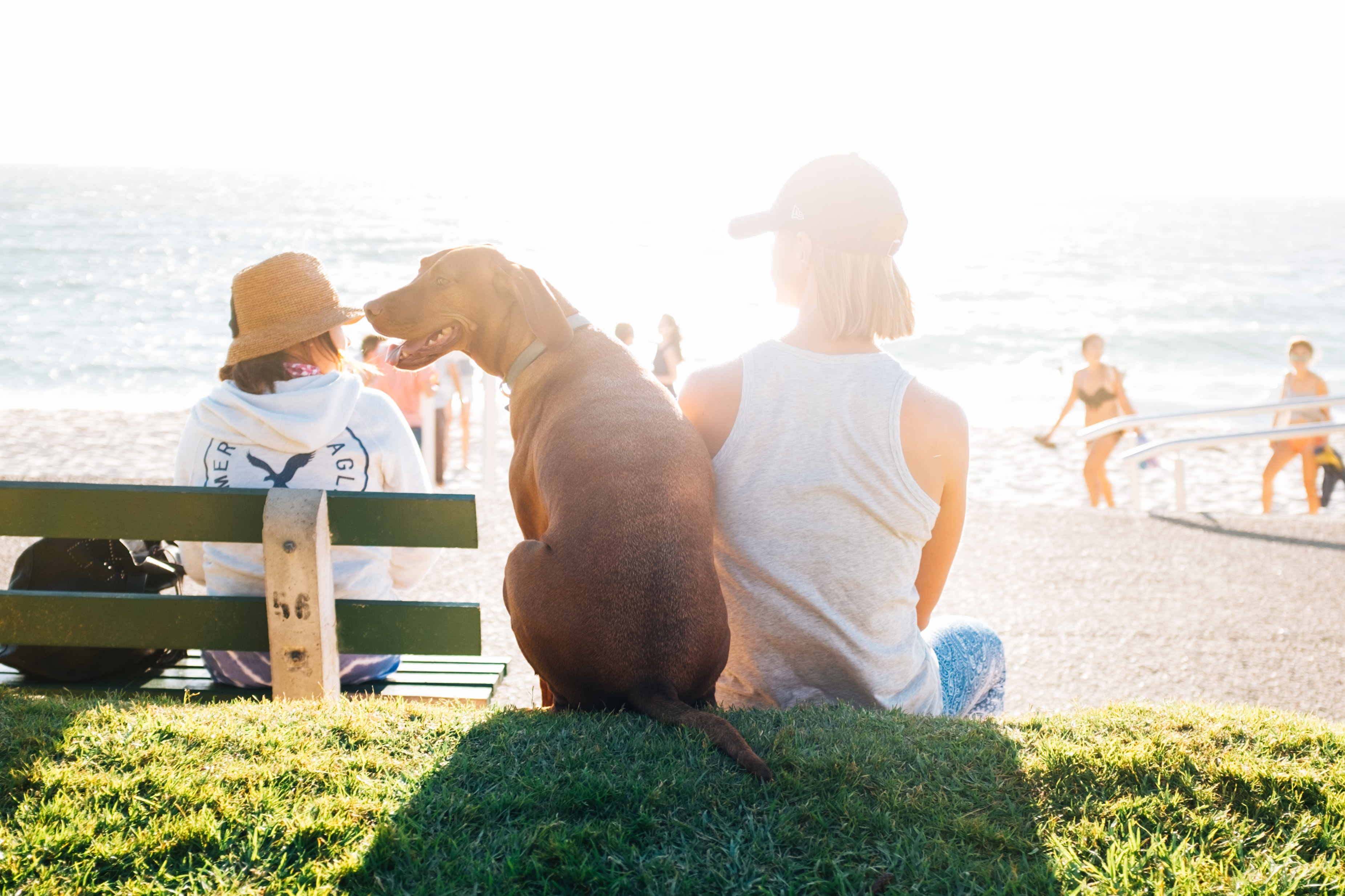 perros-mas-sociables