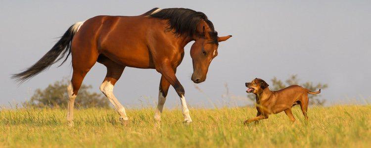 caballos ideales para perros