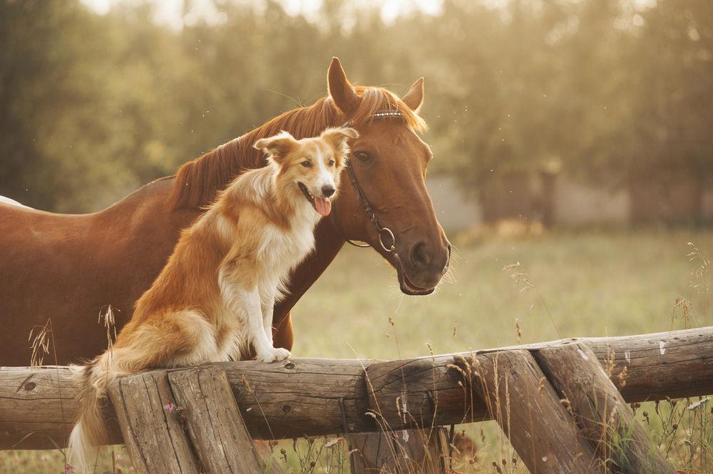 perros y caballos