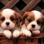 Perros para ciudad
