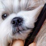 pasos para peinar a un perro