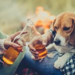 perros y alcohol