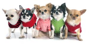 Accesorios para perros baratos