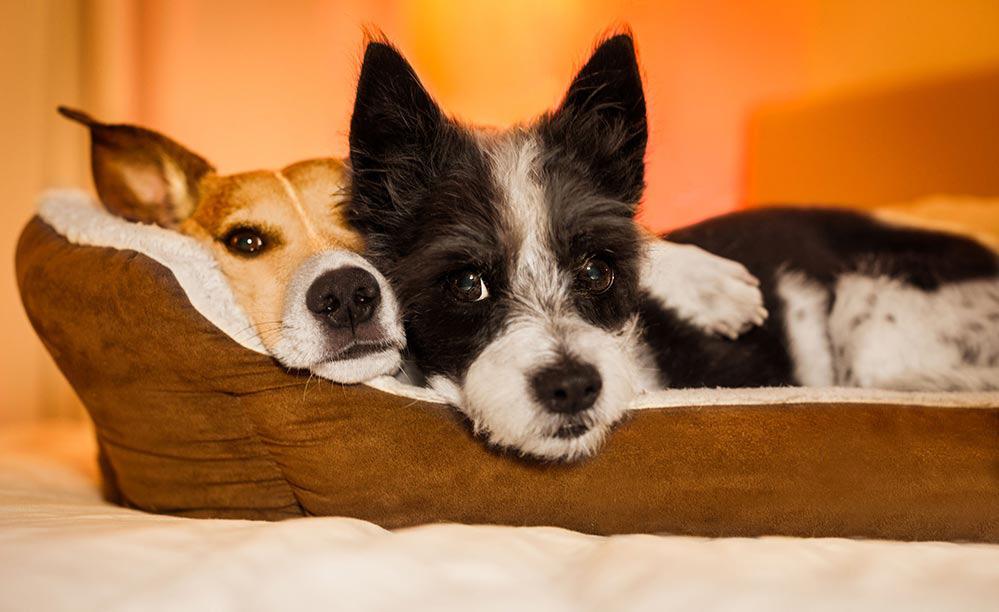 cama para perros pequeños