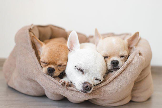 comprar cama para perros