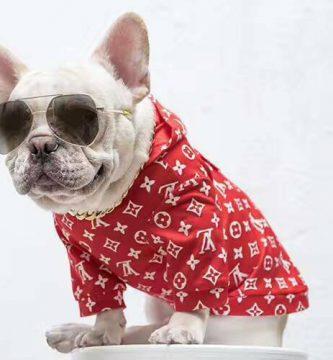 ropa para perros barata
