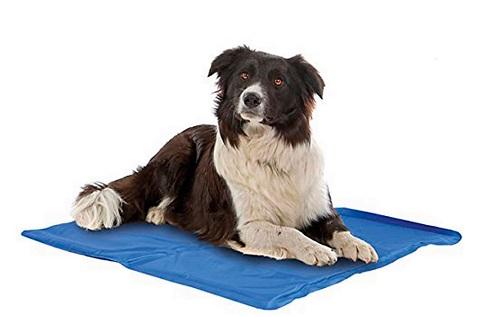 Productos para perros