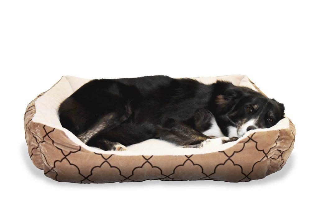 cama perro