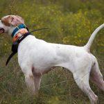collar eléctrico para perro