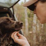 características de los perros de muestra