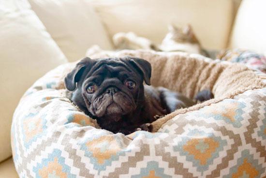 por qué comprar una cama especial para perro