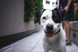 Consejos para educar a tu cachorro