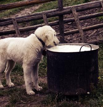 Comida cruda para perros