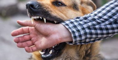 evitar que perro muerda