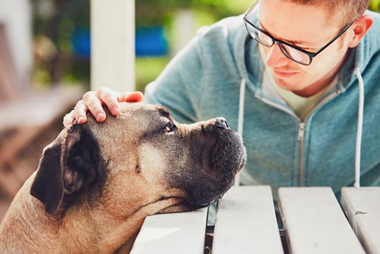 adoptar perros de compañía