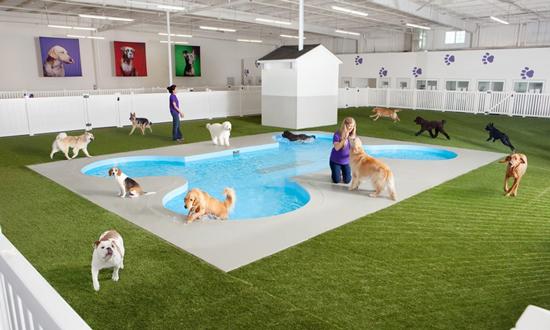 recinto para perros