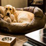 residencia perros