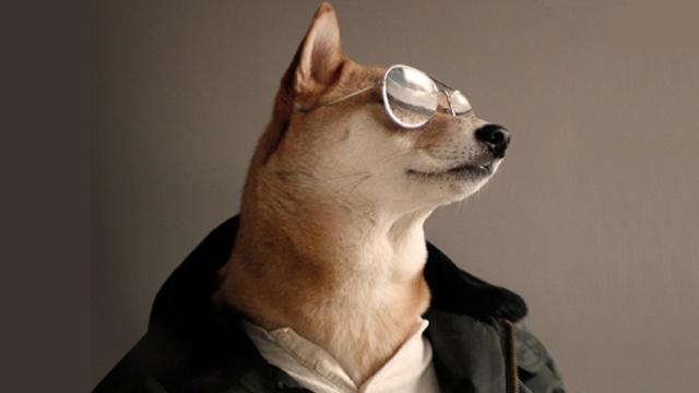 Quiénes son los mayores influencers sobre perros