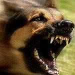 como ahuyentar perros agresivos