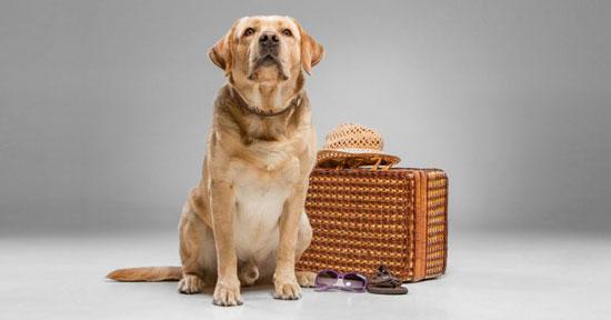 como viajar con perros