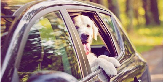 consejos para viajar con perros grandes