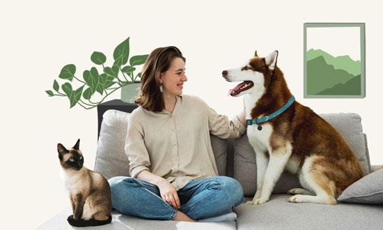 Niñeros de perros