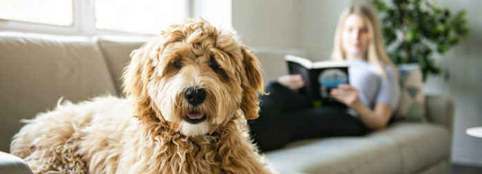 Pet sitting o residencias caninas