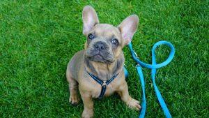 Mejores Arneses para perros