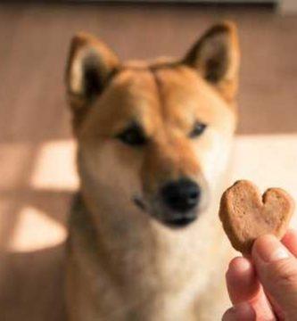 refuerzos positivos para perros